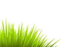 Vector grass Stock Image