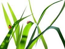 Vector grass vector illustration