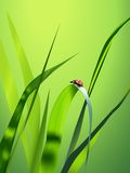 Vector grass Royalty Free Stock Photo