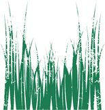 Vector grass. This are green vector glass Stock Photo