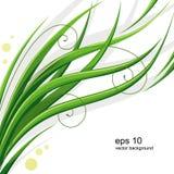 Vector grass Royalty Free Stock Photo