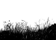 Vector grass. Black and white vector grass using as background Royalty Free Stock Image