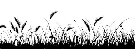 Vector Grass Royalty Free Stock Image
