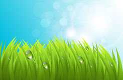 Vector grass background. Realistic grass with dew, and blue sky, fresh spring background Stock Images