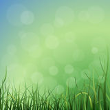 Vector grass background Royalty Free Stock Photography