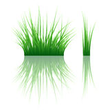 Grass banner Royalty Free Stock Photography