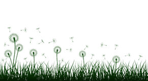 Vector grass and dandelions Royalty Free Stock Photos