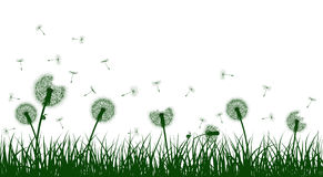 Vector grass and dandelions Royalty Free Stock Photo
