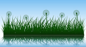 Vector grass and dandelions Royalty Free Stock Images