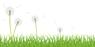 Vector grass and dandelions Stock Photos