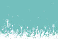 Vector grass and dandelions Stock Photo