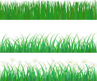 Vector grass and flower Stock Images