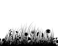 Vector grass and flowers royalty free stock photo
