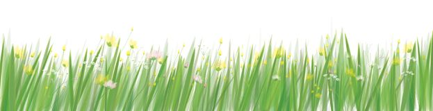 Vector grass and flowers  border. Vector grass and flowers  field, nature border isolated Stock Photos
