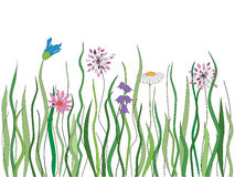 Vector grass with flowers Royalty Free Stock Photo