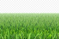 Vector grass football field background. Green grass meadow border vector pattern. Spring or summer plant lawn. Photo realistic grass on a transparent background royalty free illustration