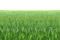 Vector grass football field background. Green grass vector pattern. Spring, summer plant lawn. Photo realistic grass on a white background. Grass football Royalty Free Stock Image