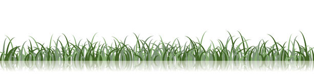 Vector Grass Illustration Stock Photo