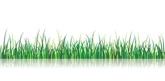 Vector Grass Illustration Royalty Free Stock Photo