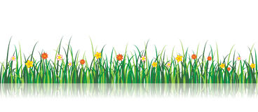 Vector Grass Illustration With flowers Royalty Free Stock Image