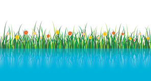 Vector Grass Illustration near the water. A vector grass illustration with flowers and a reflection in the water Royalty Free Stock Photography