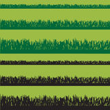 Vector grass. Stock Images
