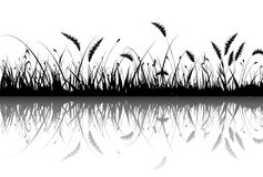 Vector grass Stock Images