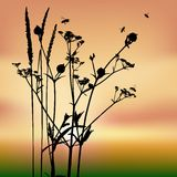 Vector grass silhouettes Stock Photos