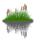 Vector grass silhouettes background with reflection in water. Royalty Free Stock Photo