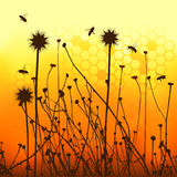 Vector grass silhouettes backgrounds and bees. 2d vector Royalty Free Stock Photography