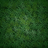 Vector grass texture. Vector realistic green grass texture Royalty Free Stock Images