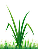 Vector grass with water drops Royalty Free Stock Photos