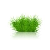 Vector grass on white background. eps10 Royalty Free Stock Photography