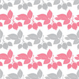 Vector Gray Pink Rosehip Berries Stripes Seamless Stock Image