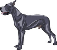 Vector. Great Dane. Stock Photography