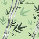 Vector green background with bamboo Stock Image