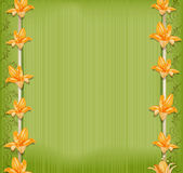 Vector green background  with border lilies Stock Photography