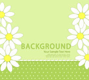 Vector green background with daisies Stock Photo