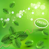 Vector green background with fresh mint leaves Royalty Free Stock Photography