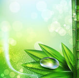 Vector green background with leaves and dew drops Stock Photos