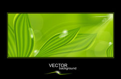 Vector green background with leaves and drops Stock Images