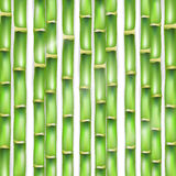 The vector green background made of a bamboo. Royalty Free Stock Photos