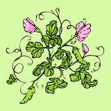 Vector green background with pink lathyrus flower Royalty Free Stock Photography