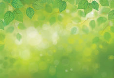 Vector green birch's leaves  on sunshine background. Royalty Free Stock Photo