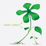 Vector of green flower Royalty Free Stock Photos