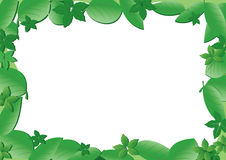 Vector green frame with leaves. A frame with green leaves Royalty Free Stock Photos