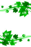 Frame with leaves Royalty Free Stock Photography