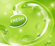 Vector green fresh background with leaves Royalty Free Stock Images