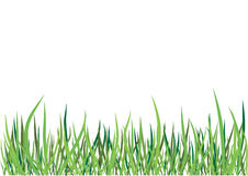 Vector green grass Stock Photos