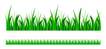 Vector green grass. Vector set illustration of green grass isolated over white background Royalty Free Stock Images